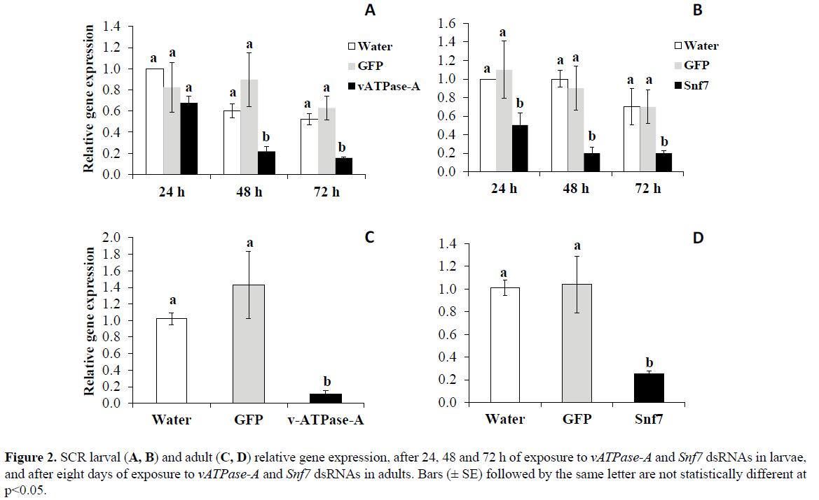 rnai-and-gene-silencing-SCR-larval