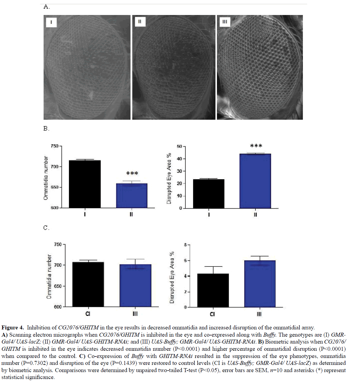rnai-and-gene-silencing-decreased-ommatidia