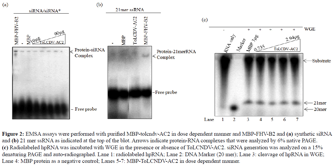 rnai-and-gene-silencing-purified-MBP