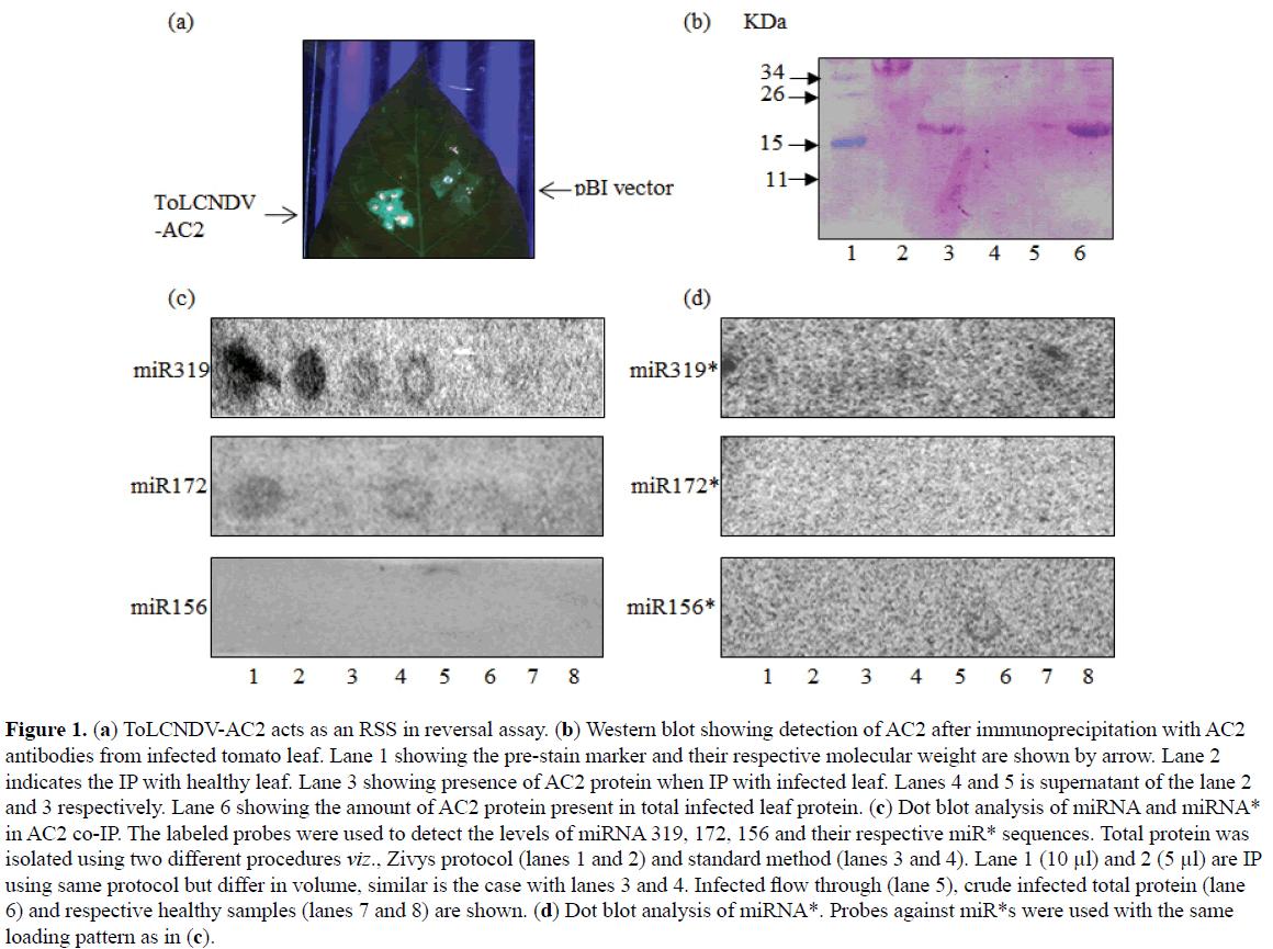 rnai-and-gene-silencing-reversal-assay