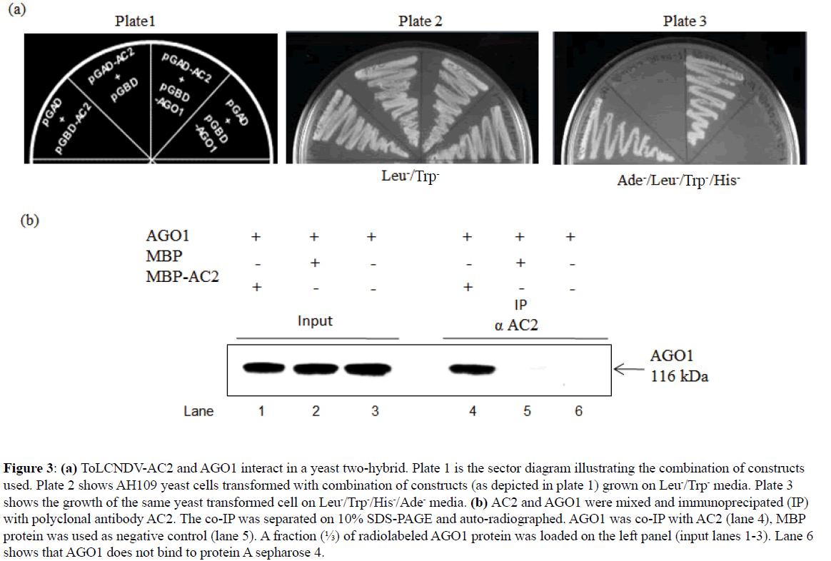 rnai-and-gene-silencing-yeast-two-hybrid
