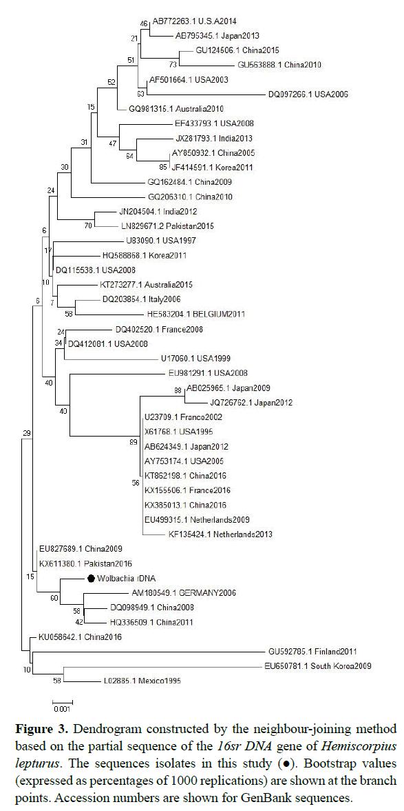 rnai-gene-silencing-Dendrogram-constructed