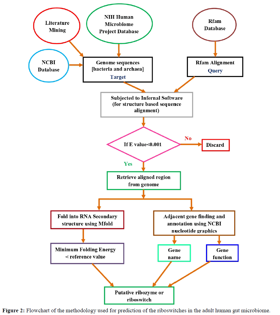 rnai-gene-silencing-flowchart