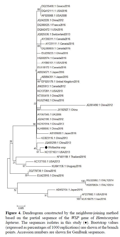 rnai-gene-silencing-partial-sequence