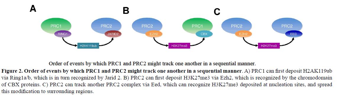 rnai-gene-silencing-sequential-manner