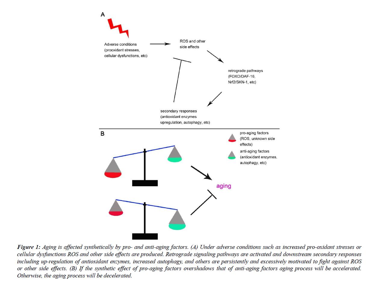 translational-research-anti-aging-factors