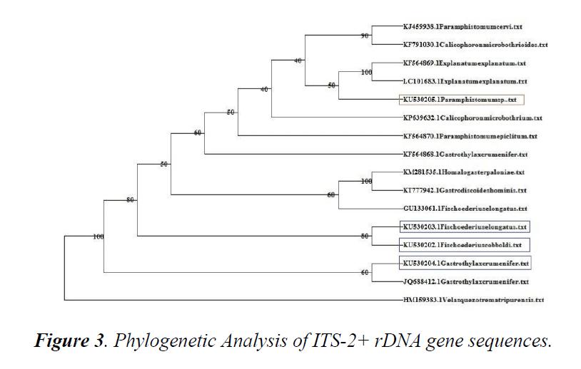 veterinary-medicine-phylogenetic-analysis