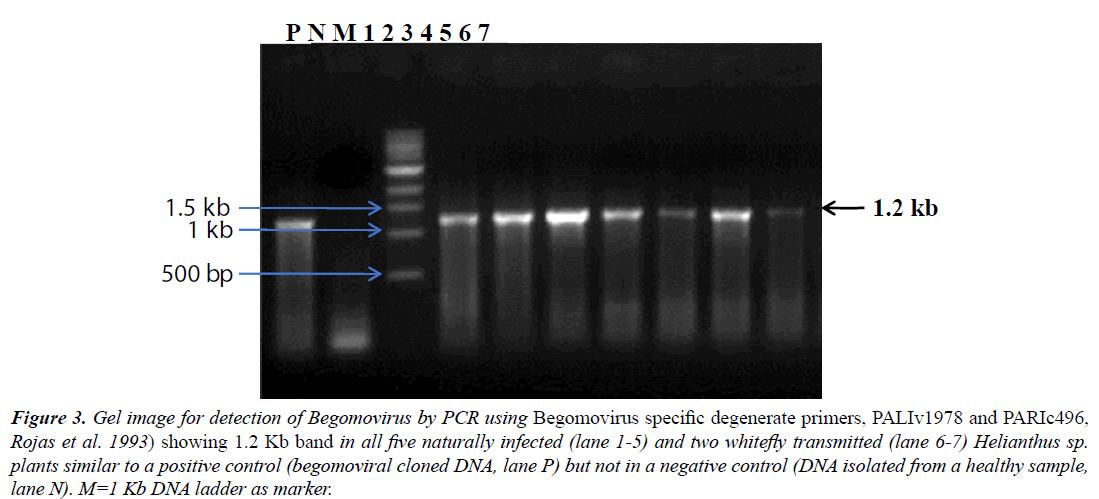 virology-research-Gel-image