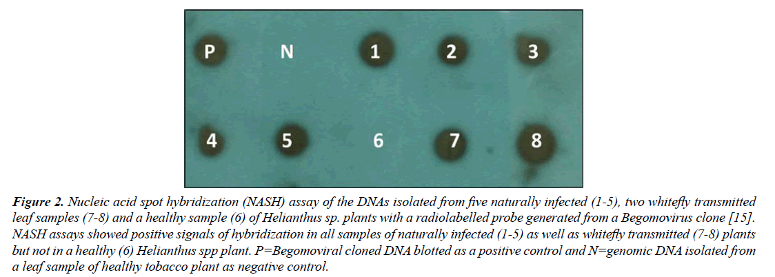 virology-research-Nucleic-acid
