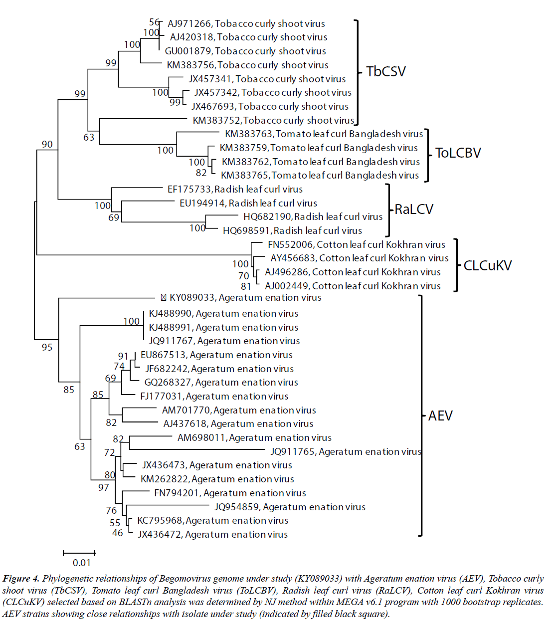 virology-research-Phylogenetic-relationships