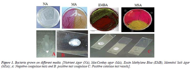 virology-research-bacteria